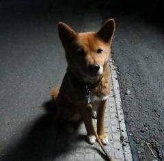 IMG_syoko190217.jpg